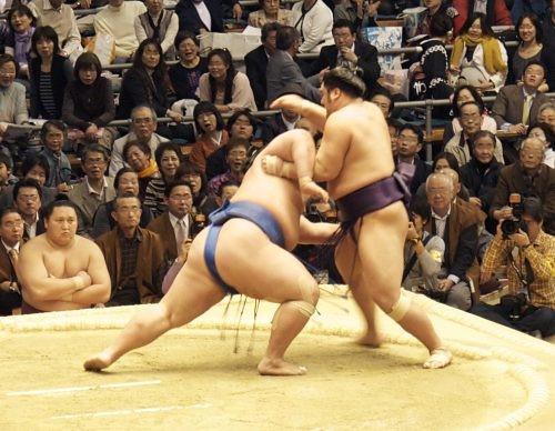 Sumo wrestlers in action